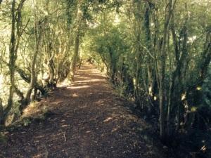 Rambling on the abandon Osgathorpe canal tow path